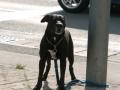 Hundeattacke Saarlouis (3).JPG