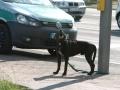 Hundeattacke Saarlouis (4).JPG