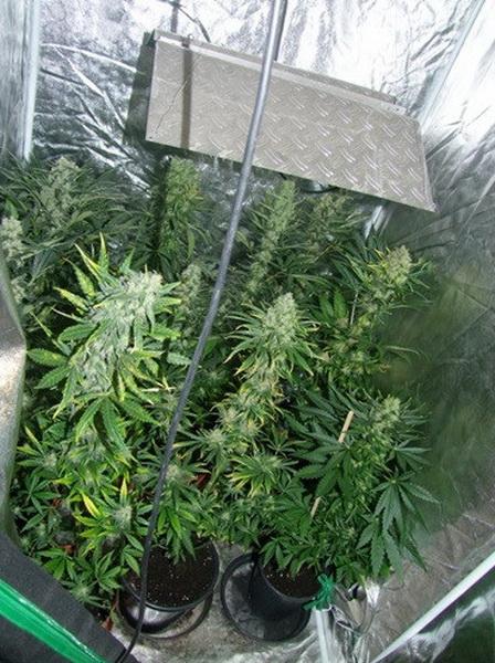 Indoor Plantage