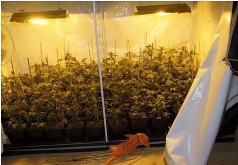 professionelle indoorplantage in sankt ingbert entdeckt blaulichtreport. Black Bedroom Furniture Sets. Home Design Ideas