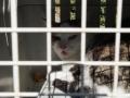 Katze in Not - St. Johann