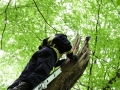 Tierrettung Neuweiler (1)