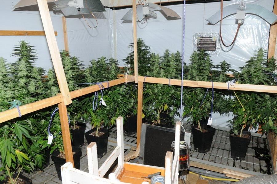 indoor-plantagekl