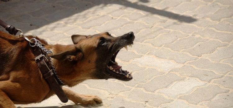hundebiss