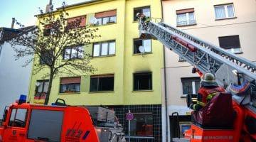 Wohnungbrand fodert 3 Tote Katzen