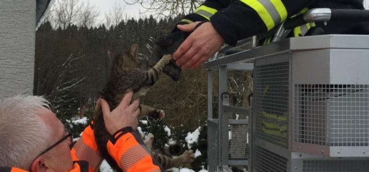 Tierrettung-Nonnweiler
